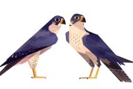 Syd Weiler birds