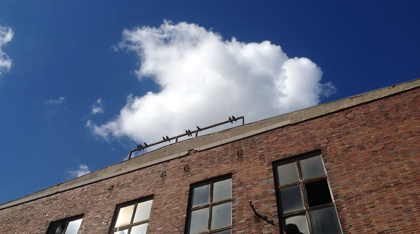 tj-toomanybirds-5a-web0