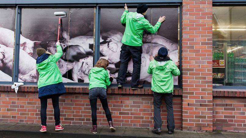 """Protestaktion von Greenpeace Hamburg. Der Lidl in der Brauhausstraße 23 wird mit Bildern aus Schweineställen plakatiert und ein Banner mit der Aufschrift """"Lidl lässt Schweine leiden"""" über dem Eingang aufgehangen. Am 24.11.2017. FOTO: Niklas Grapatin"""
